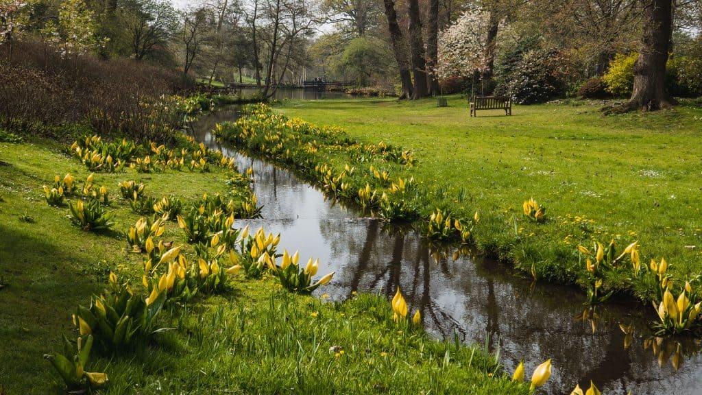 Savill Garden in spring