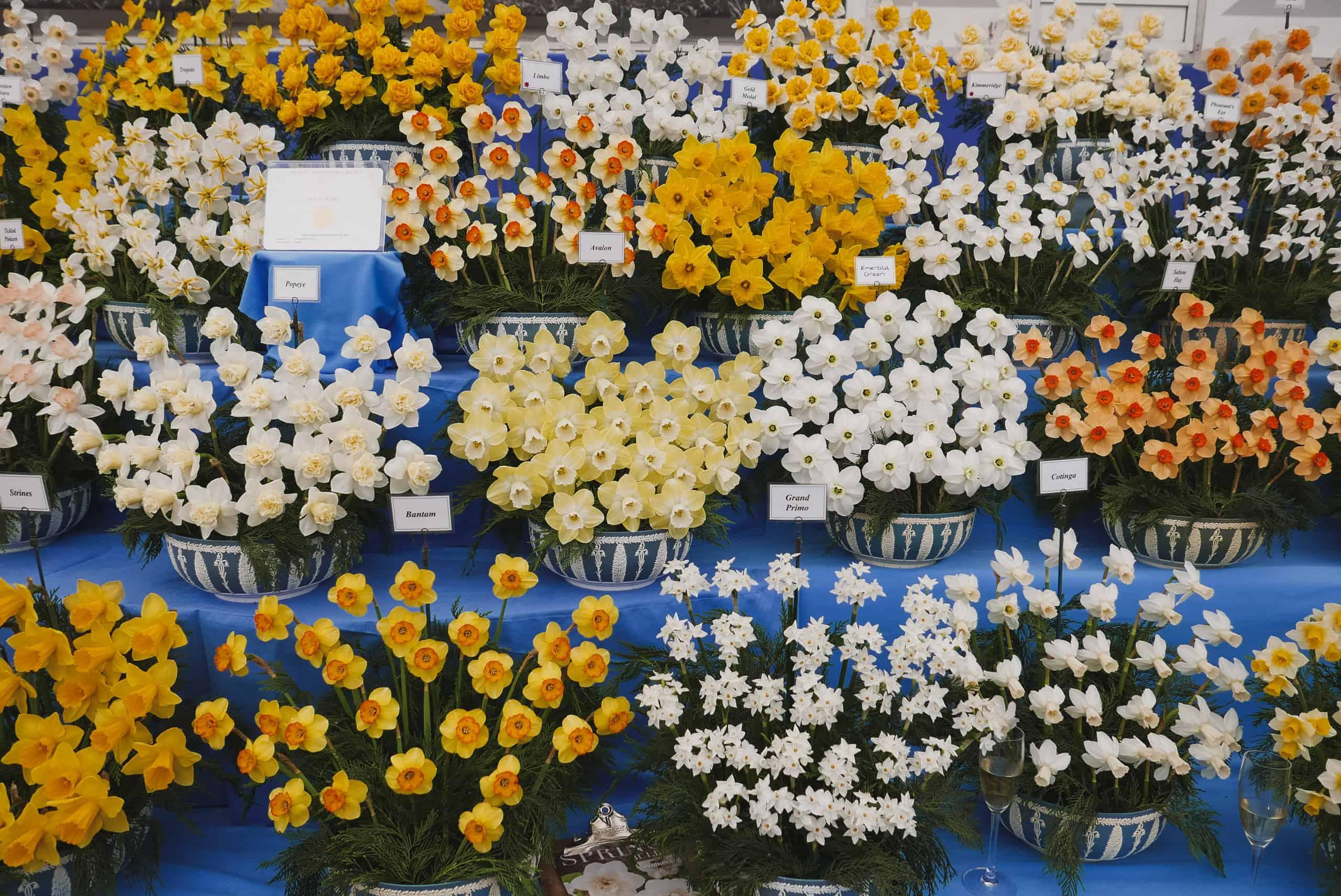 RHS Chelsea Flower Show 2018