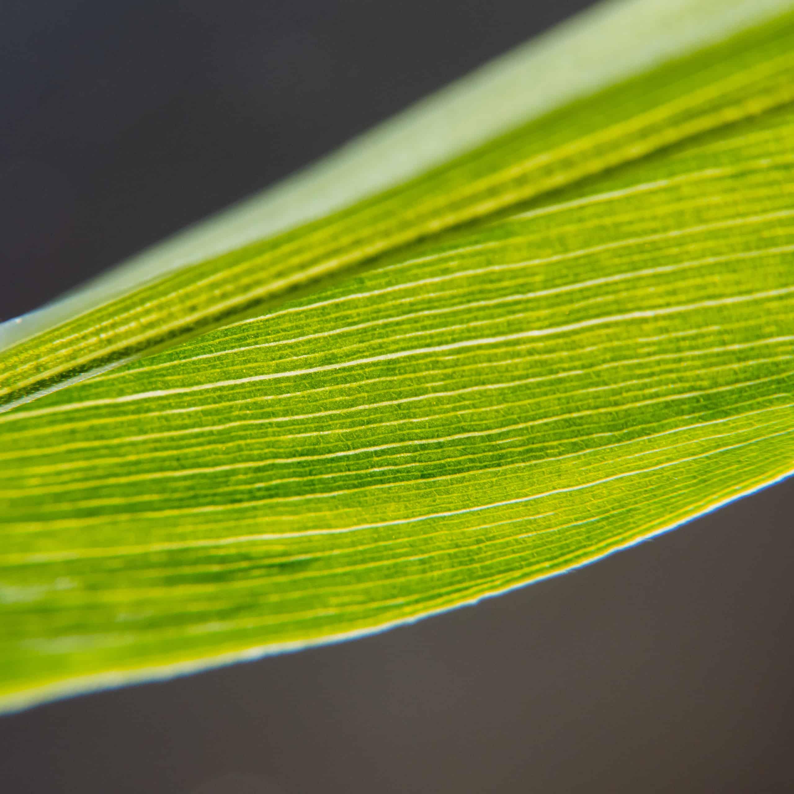 seeds of lockdown leaf