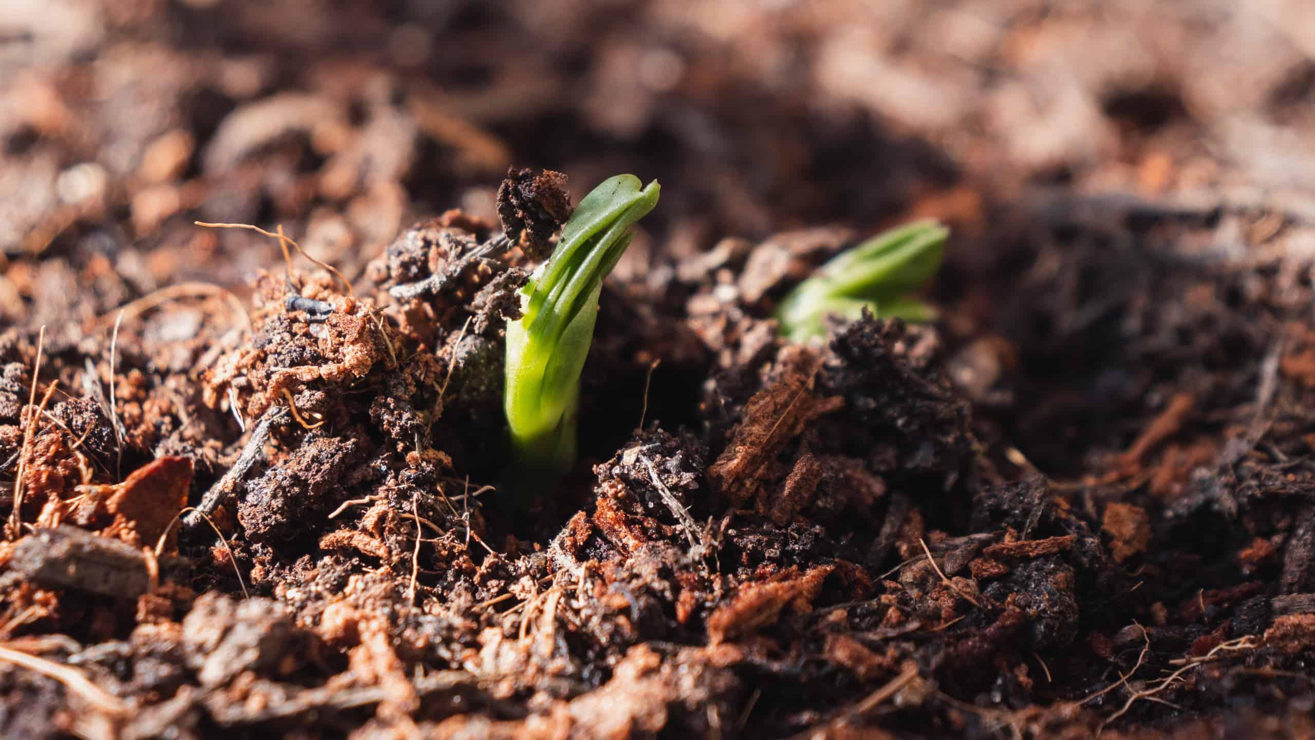 seeds of lockdown