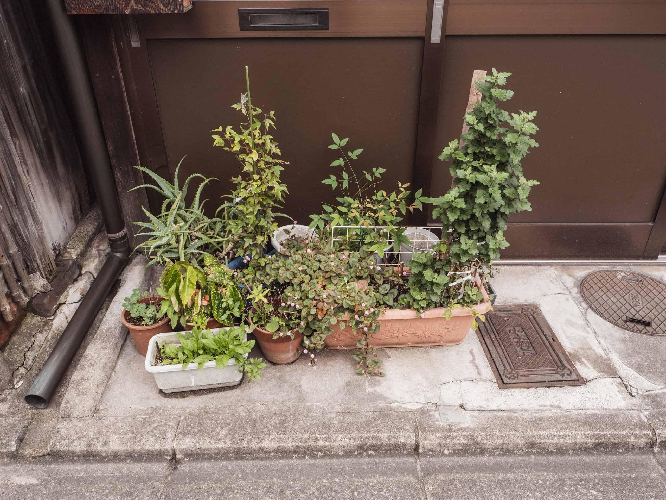 japan-pavement-gardens
